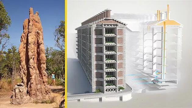 永續建築的指標性推手 Arup在辛巴威興建的東門購物與辦公中心(Eastgate Shopping and Office Centre),利用了仿生學原理模仿白蟻窩的結構,讓建築物能夠自行散熱,比起類似的建築物減少了 35% 的能源使用。
