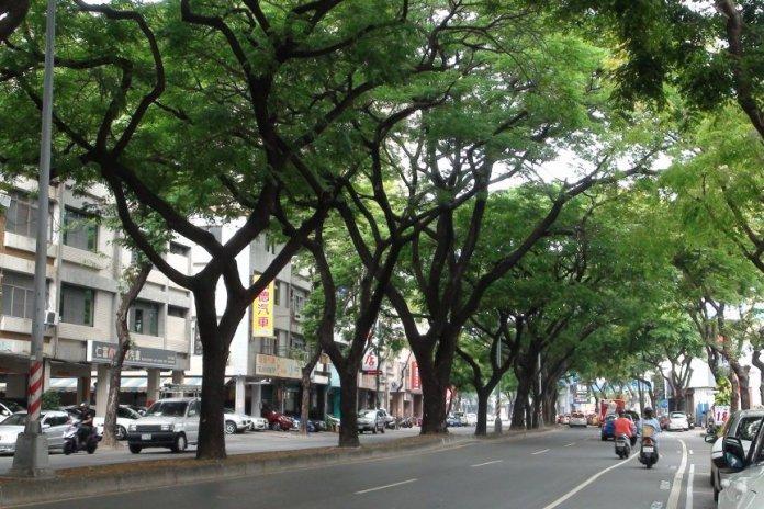 路樹可增加道路的綠色空間。