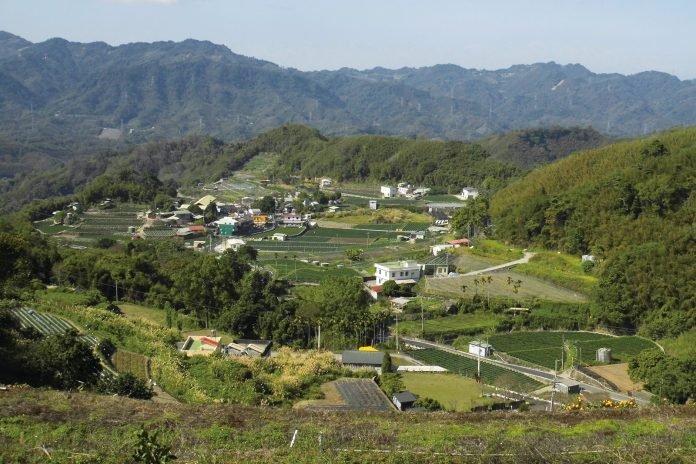 梯田是坡地栽培管理的好方法,圖為苗栗馬拉邦山梯田。