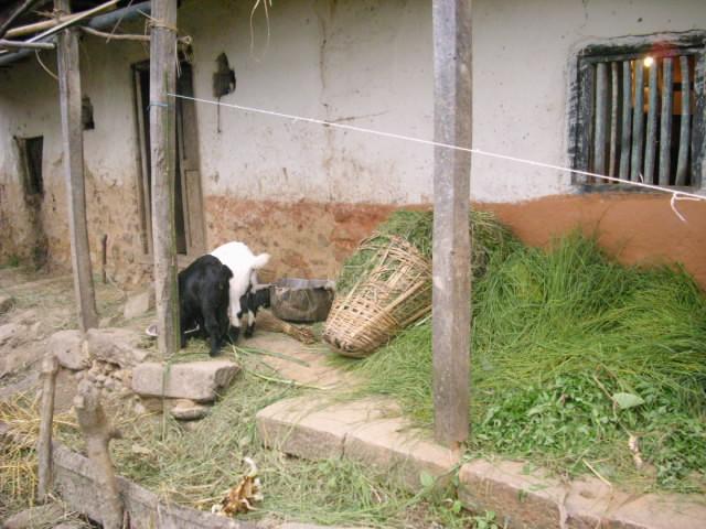 加德滿都谷地的傳統泥屋。
